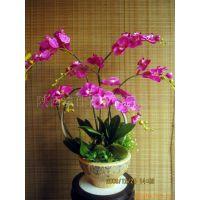 专业供应 家居人造花蝴蝶兰盆景 各种仿真植物盆景及盆景素材