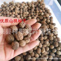 批发供应优质山桃种子 毛桃种子 桃核发芽率高 保质保量 量大优惠