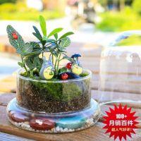 微景观玻璃瓶 苔藓瓶 创意摆件绿植 家居饰品 生态瓶 diy情侣礼品