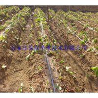 中原区温室滴灌|供应微灌管|花卉滴灌专用