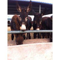 肉驴养殖场,肉驴价格,养驴行情分析,怎样养驴,山东养驴场