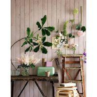 """顺吉装饰 绿植的诱惑 """"种""""在墙上的盆栽"""