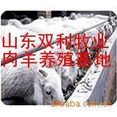 山东双利牧业大型种羊养殖场 销售万只优良肉羊山羊绵羊种苗品种
