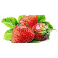 湖州市甜宝草莓苗_仁源农业科技_甜宝草莓苗直销