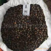 供应花木种子,茶树种子,苗木种子,优质茶树种子