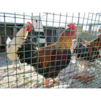 荷兰网 绿色 养殖网 养鸡网 玉米网 小区围墙网 道路隔离网