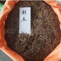 供应杉木种子,苗木种子,优质杉木种子,杉木种子价格