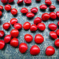 供应正品天然9mm左右马来西亚相思豆相思红豆打孔一斤批发