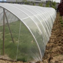 供应防虫网价格 防虫网罩加工 蔬菜防虫网规格 大棚防虫网生产厂家