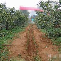 小型手扶田园管理机 茶园松土施肥机 甘蔗双向培土开沟机 圣通
