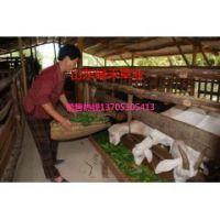 浙江省养羊现在适合种什么牧草哪里有卖的