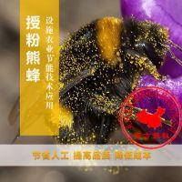 Biobest碧奥特比利时熊蜂授粉技术_大棚蔬果授粉熊蜂_标准箱
