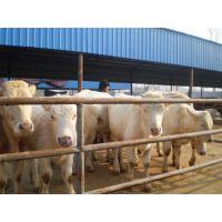 养羊 致富经-养羊繁殖技术