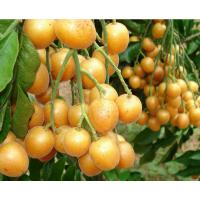 11元一斤广西特产时令新鲜水果 黄皮果 果园直销鸡心果热销中
