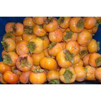 陕西柿子基地7月黄狮子座8月黄柿子日本甜柿子产地直销价格