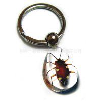 厂家批发 加工定制 真实昆虫 昆虫水晶琥珀钥匙扣 旅游纪念品