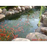 云南省游泳池水循环净化系统公司