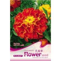 花仙子原装优质观叶植物种子(孔雀草种子)盆栽种子 花种子