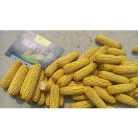2105年审定的玉米新品种航星118