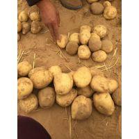 围场三区荷兰十五土豆代收1551236-1144