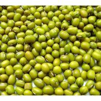 绿豆 内蒙古特产 绿豆批发 绿豆价格 内蒙古赤峰 绿豆出口