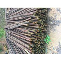 供应农用青菜架竹 大棚竹竿 树木支撑杆