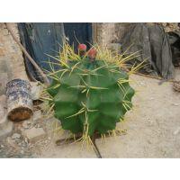 玻璃钢仿真植物雕塑仙人球雕塑