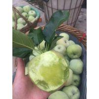 糖心苹果 绿皮印东蜜嫁接苹果苗 老式印东青苹果树2年苗