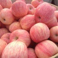 山东精品红富士苹果供应价格
