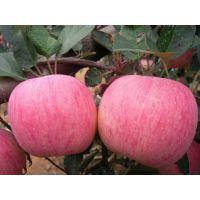 山东红富士苹果供应商基地红富士苹果最新价格