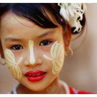 森冉生物特纳卡粉/黄香楝粉/缅甸香木粉 植物面膜粉 香料