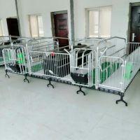 养猪户专用设备 养母猪专用 双体母猪产床厂家直销