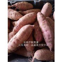 山东特产板栗红薯金秋十月上市