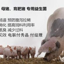 母猪便秘用什么药好微尔生物厂家