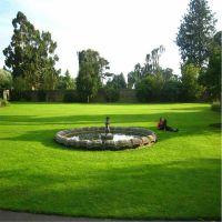 人造草坪、 景观人造草坪