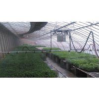 衡水华耀农业生产温室育苗喷水系统