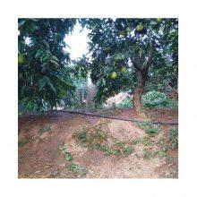 山丘柑桔树微喷灌系统一亩多少钱