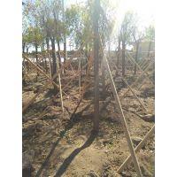 齐齐哈尔富拉尔基树木支撑架厂家行业领先
