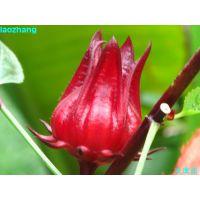 食品级玫瑰茄红色素生产厂家