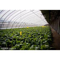 江苏泰州高保温性日光温室高温大棚4米高度型工程造价