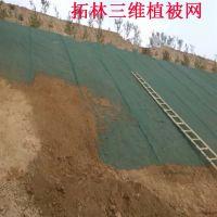 三维植被网护坡 塑料绿色三维网 种草三维网