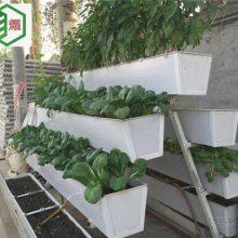 草莓立体种植-草莓采摘哪里好-水果采摘一日游-农业园