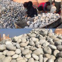 广东鹅卵石厂家 圆形鹅卵石铺路 人工挑选小河石 规格齐全 英德石英石产地 英石价格