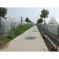 山东济南绿色有机蔬菜大棚温室种植园3米、圆顶连体型建造价格