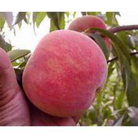 38号桃红不软,平谷原产地直发大桃,8月份成熟大桃