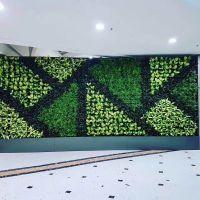 长沙户外庭院墙体绿化,长沙别墅庭院室内植物墙