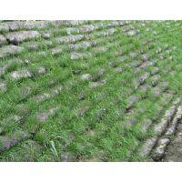 陕西土工袋生态袋草籽袋边坡护坡袋尺寸40*80专业生产厂家