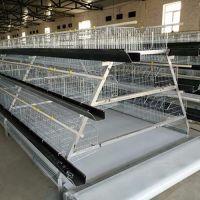厂家批发自动化养鸡设备HS-JL蛋鸡笼 宏盛农牧