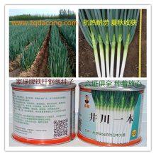 日本晚抽大葱种子 第一高产新品种 井冈晚抽 长宝 天光 井冈一本 日本钢葱种 日本铁杆大葱种子