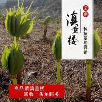 云南汇聚农业科技开发有限公司